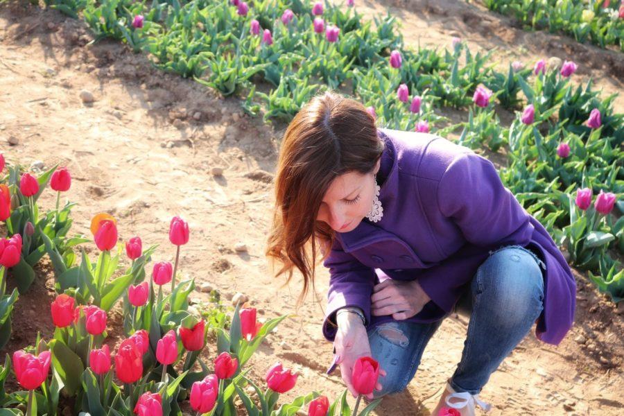 I tulipani di Arese
