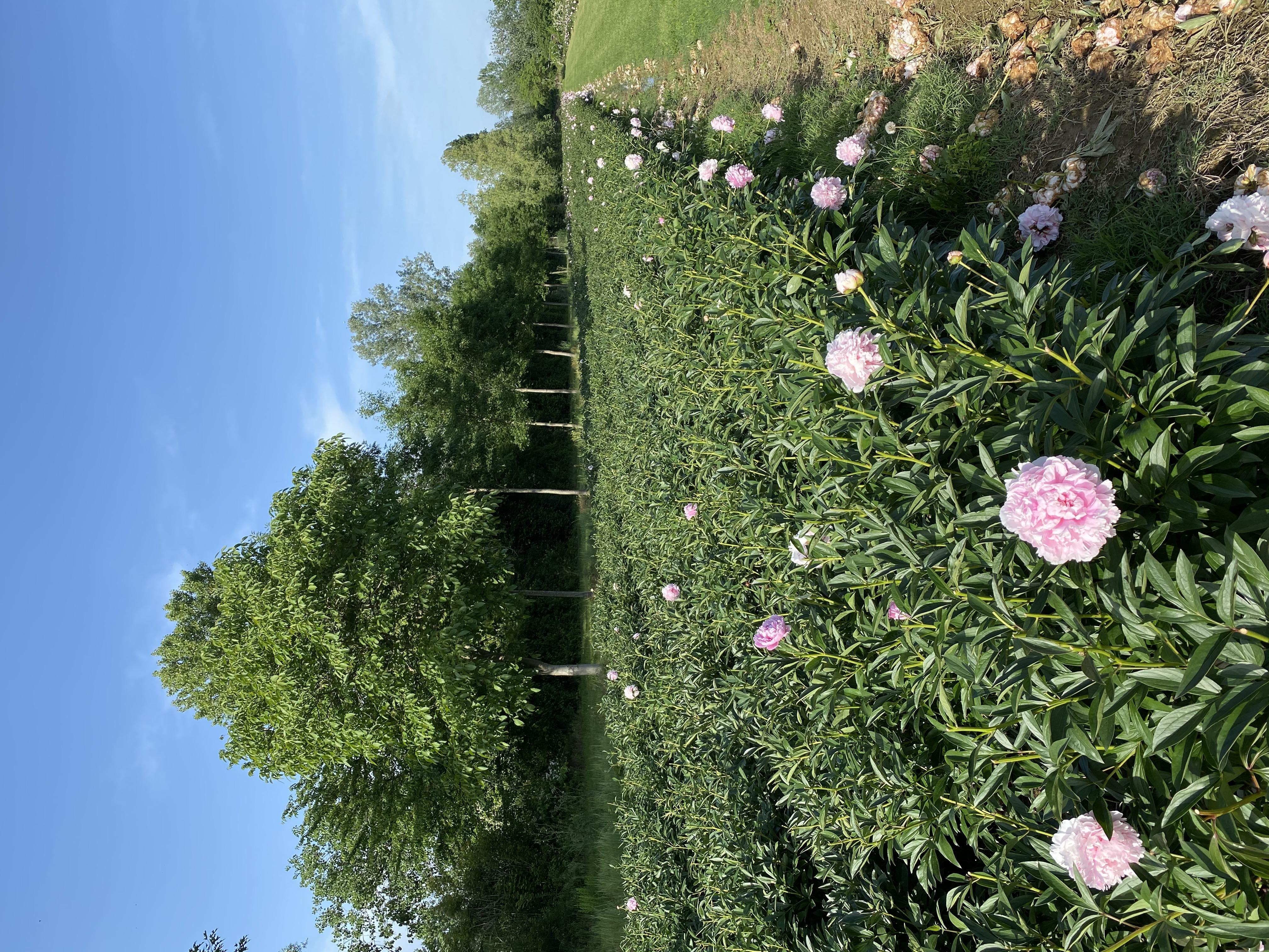 Giardini Visconte Filari Peonie