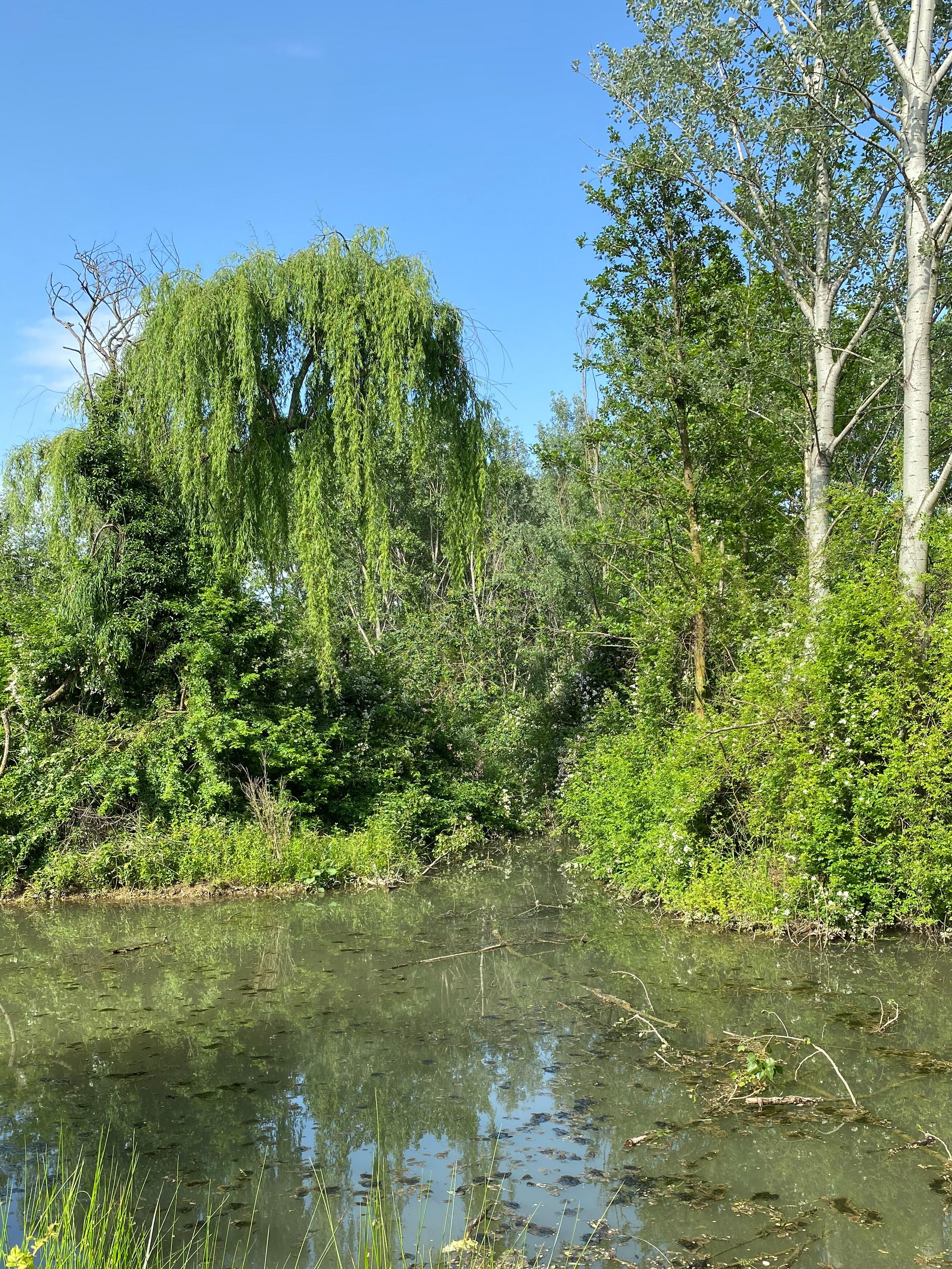 Giardini Visconte Laghetto dettaglio