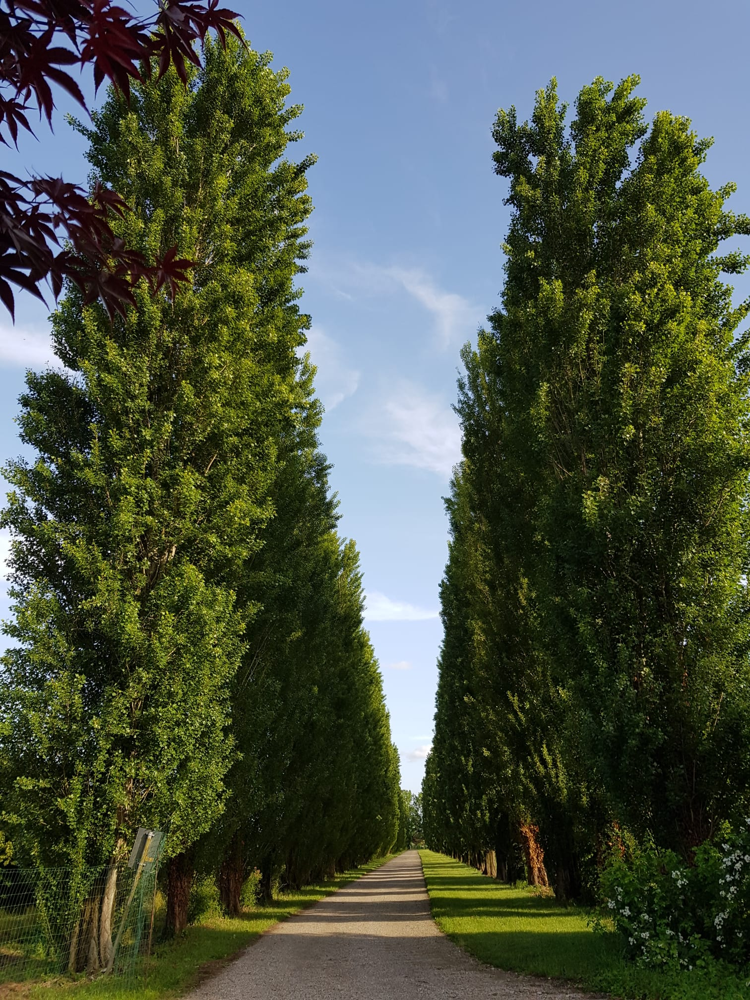Giardini Visconte Viale Alberato