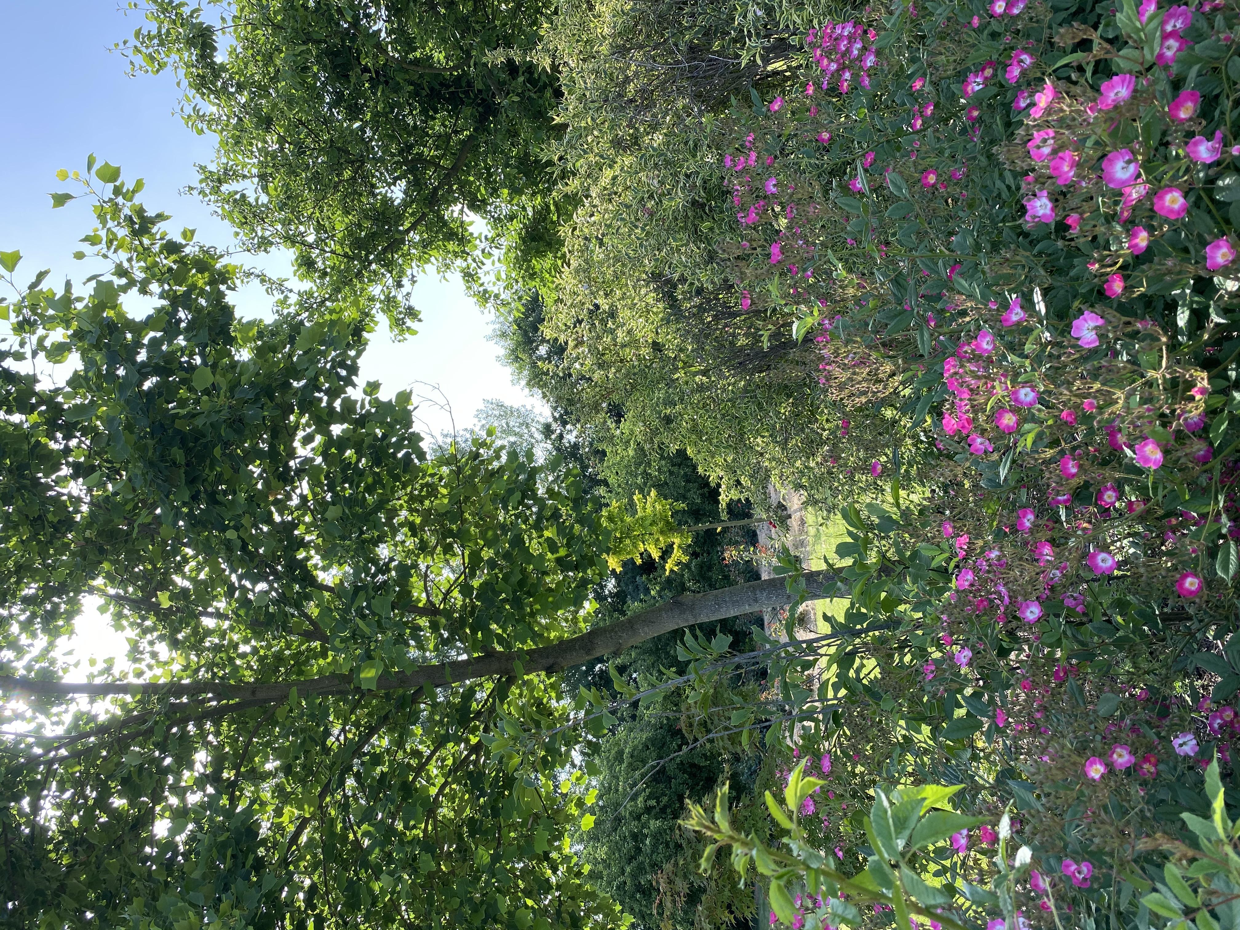 Giardini Visconte roseto