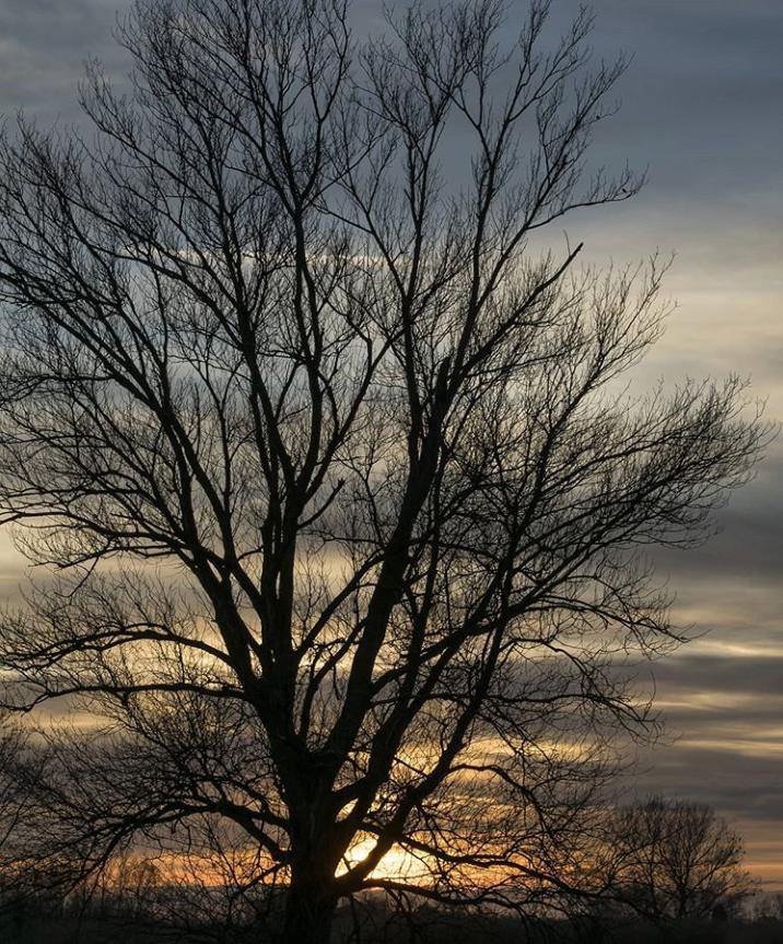 Maryguidi1_albero e abbracci